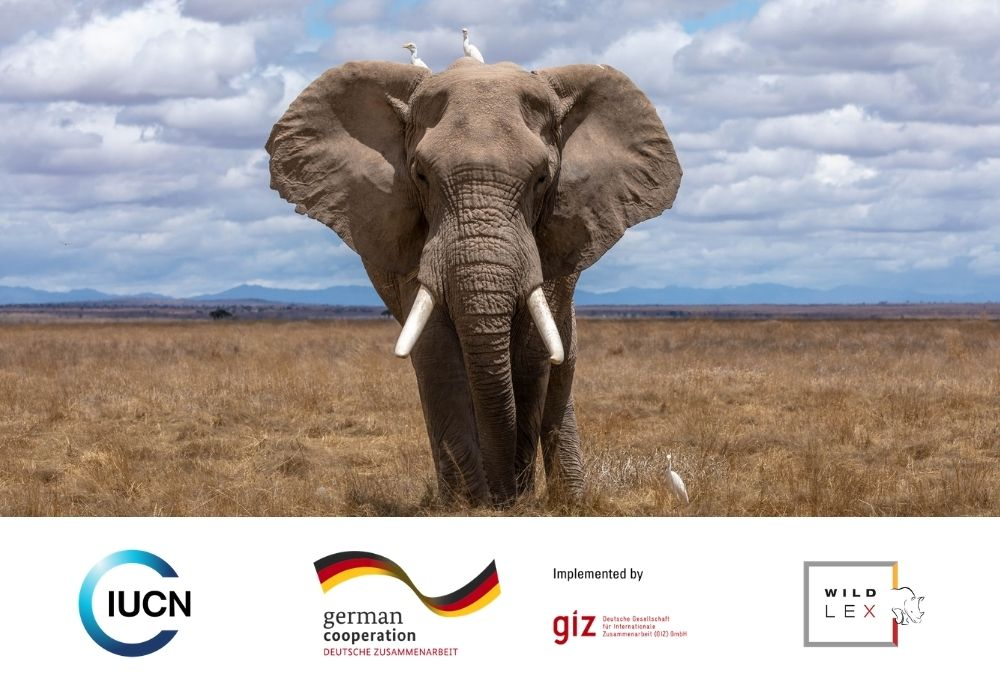 Wildlife Crime: Legal and Institutional Aspects
