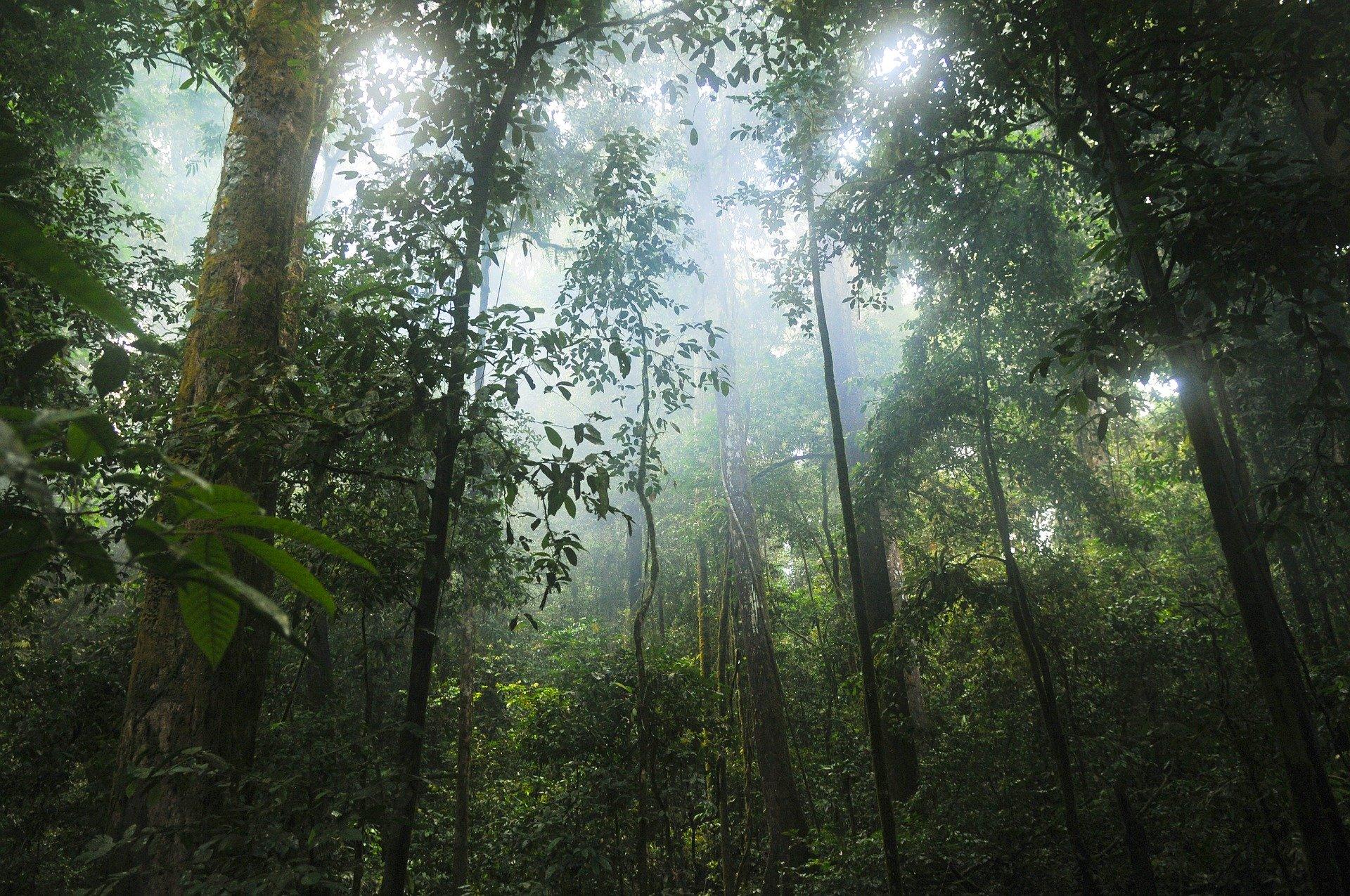 Selva Maya: aspectos legales e institucionales para la conservación/Maya Forest : legal and institutional aspects of conservation